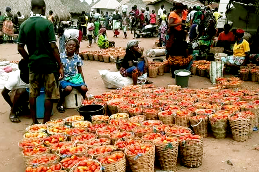 tomato wastage © I am Benue 2020